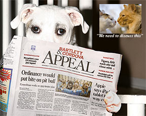 Pit bull reads newspaper picture inset with cats
